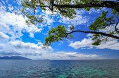 树有海和蓝天背景 免版税库存图片
