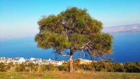 树有看法向Sea of Galilee湖 免版税库存照片