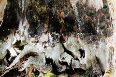 树有眼睛 免版税库存照片
