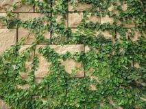 树有砖墙背景 图库摄影