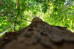 树有绿色叶子蚂蚁眼睛视图 免版税库存图片