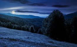 树木丛生的小山的草甸在山在晚上 库存图片