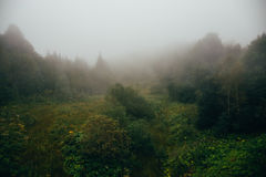 树木丛生的山坡或小山冥想的行家风景在低云彩与树在薄雾或雾 库存照片