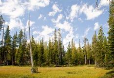 树木丛生的沼泽地 免版税库存照片