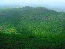树木丛生的绿色横向 免版税库存照片