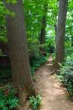 树木丛生的道路穿过巴恩斯博物馆费城,宾夕法尼亚 免版税库存照片