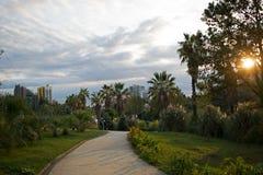 树木园在索契 免版税库存图片