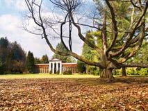 树木园大量stiavnicka结构树turcianska 库存照片