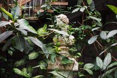 树木园植物园 库存照片