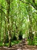 树木天棚叶子在有光的森林里咆哮上面纹理 免版税库存图片
