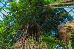 树木天棚在亨利杜尔利动物园奥马哈内布拉斯加的热带密林封入物 库存照片