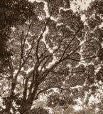 树木天棚看法  免版税库存照片