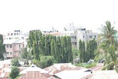 树木天棚 免版税库存图片