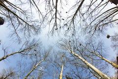 树木天棚 免版税图库摄影