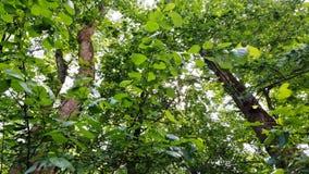 树木天棚 免版税库存照片