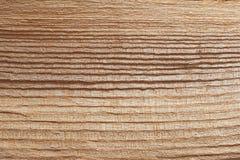 树木头纹理 图库摄影
