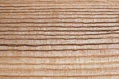 树木头纹理 库存图片