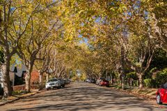 树木成行街道在住宅邻里在一晴朗的秋天天 免版税库存图片