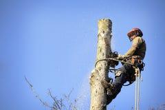 树木栽培家剪切结构树 免版税库存照片