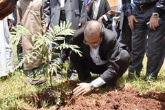 树木种植在内罗毕 库存照片