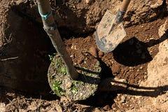 树木种植 免版税库存图片