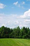 树木繁茂区的天空 免版税库存照片