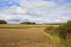 树木繁茂的农业风景 图库摄影