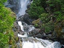 树木繁茂的原野围拢的瀑布 库存图片