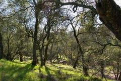 树木繁茂的小山 库存照片