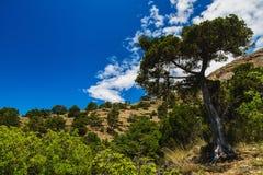 树木繁茂的山脉 免版税库存照片