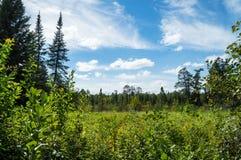 树木繁茂的草甸 库存照片