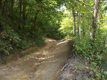 树木繁茂的走道 库存图片