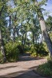 树木繁茂的路 免版税图库摄影