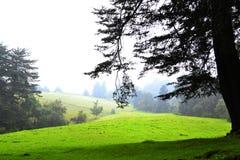 树木繁茂 免版税库存图片