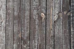树木背景的结构 免版税库存照片
