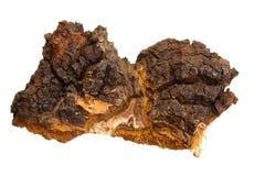 树木蘑菇 免版税库存图片