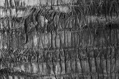 树木头 免版税库存图片