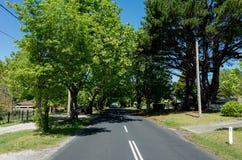树机盖沿郊区路的 免版税库存照片