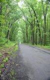 树构筑的一条车道路在森林里 库存照片