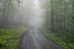树构筑的有雾的一条车道路在森林里 库存照片