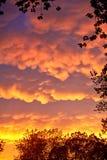 树构筑的罕见的Mammatus云彩在一场风暴以后在中西部在夏天期间 免版税库存图片