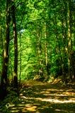 绿树林 免版税库存图片