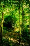 绿树林 库存照片