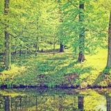 绿树林 免版税库存照片