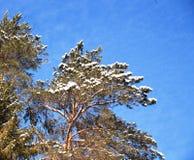 树枝冬天风景反对天空的 免版税库存照片