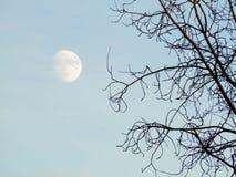 树枝剪影反对晚上 免版税图库摄影