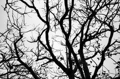 树枝剪影 库存图片