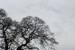 树枝剪影 免版税库存照片