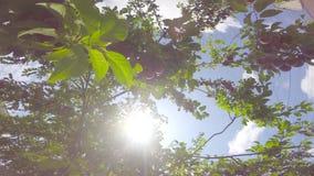 树枝加点用果子 股票视频