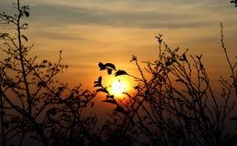 树枝和叶子剪影在秋天在太阳前面在日落 图库摄影